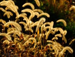 Bald-Eagle-State-Park-Golden-Grasses-8817