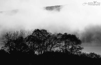 Foggy Morning - Bald Eagle State Park - Central Pennsylvania