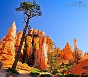 Down Below - Bryce Canyon National Park - Utah