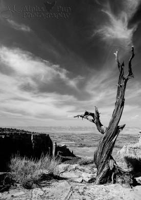 To the Sky & Far Away - Colorado National Monument