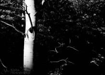 Into the Woods at Great Sand Dunes