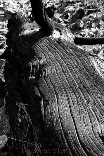 Remains - Greyrock Trail - Colorado
