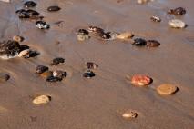 Jalama Zen - Jalama Beach - Central Coast California