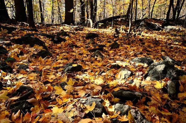 Fall at Meng Preserve - Limerick, PA