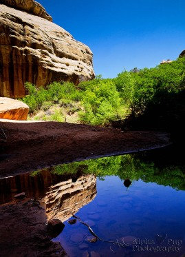 Reflections - Natural Bridges National Monument - Utah