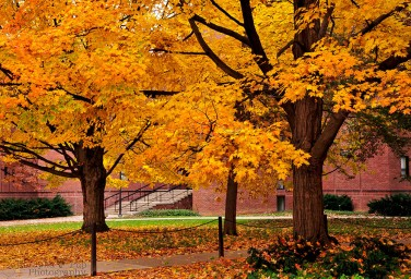 Yellow Autumn - Penn State University - University Park, PA