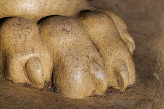 Lion's Paw - Penn State University