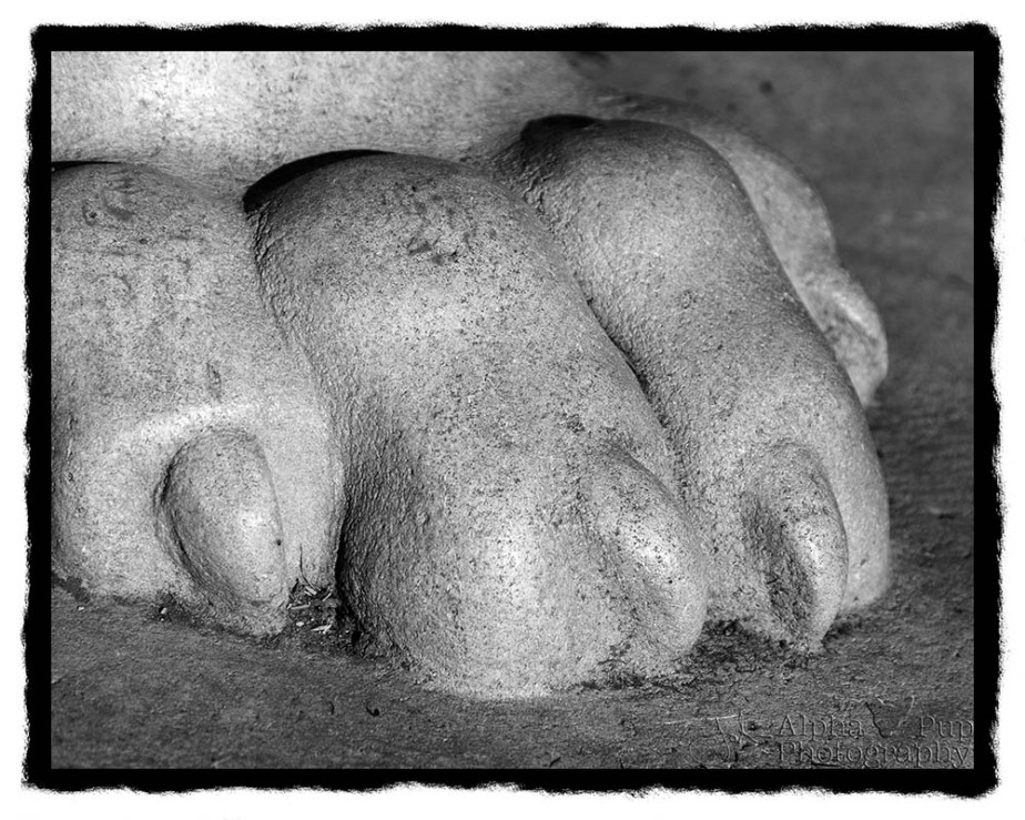 Lion's Paw - Penn State University - B&W Rebate Border
