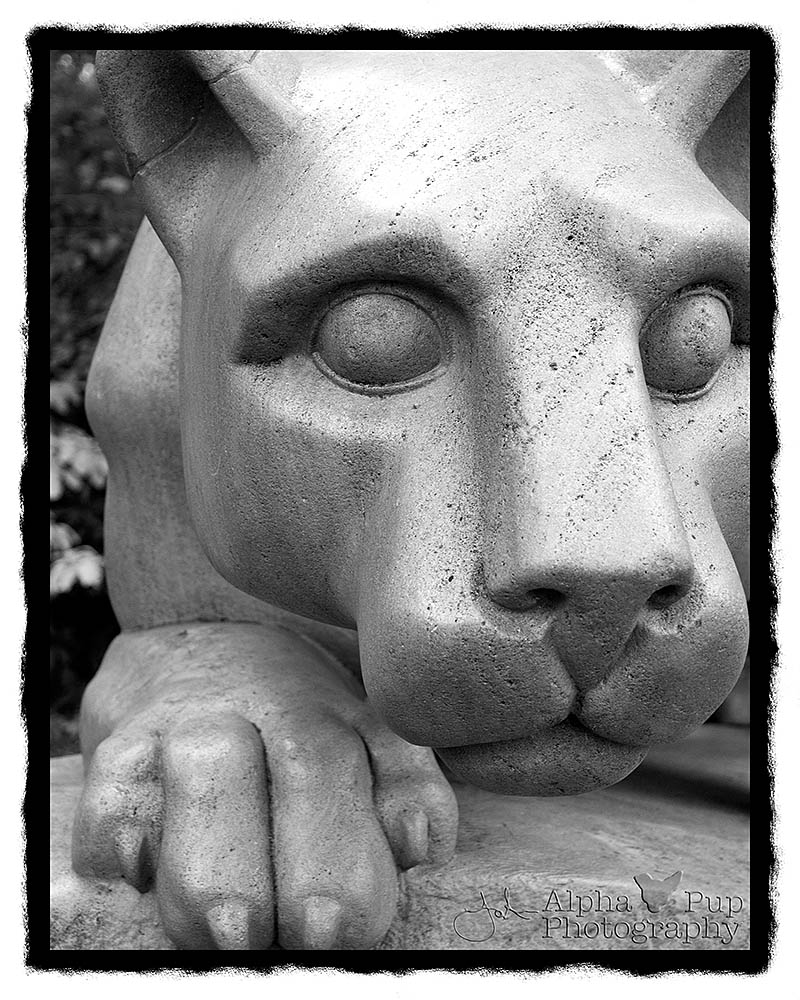 The Nittany Lion - Penn State University - University Park, PA - B&W Rebate Border