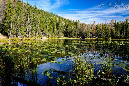 Nymph Lake - Rocky Mountain National Park - Colorado