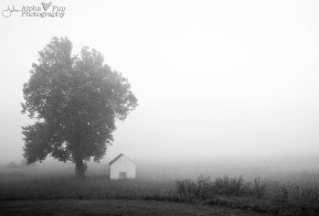 Foggy Morning - Valley Forge NHP
