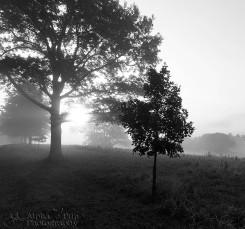Valley Forge National Historic Park - Foggy Sunrise