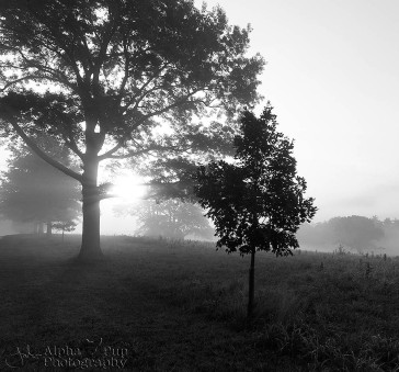 Valley Forge National Historic Park - Foggy Sunrise