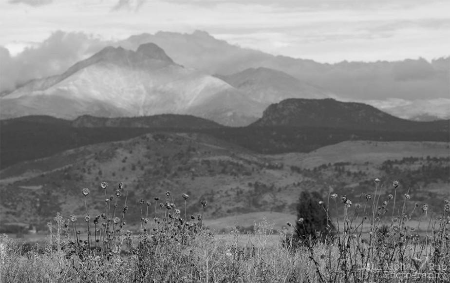 Late Summer Thistles, Mount Meeker, & Longs Peak