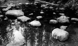 Stepping Stone Reflection