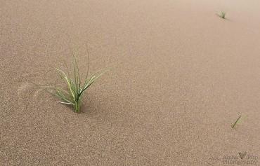 Zen Grasses
