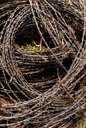 Barbed Wire Rounds