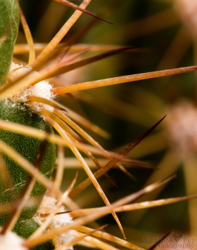 Thicket of Spines