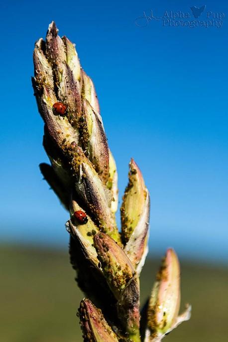 Yucca & Lady Bugs