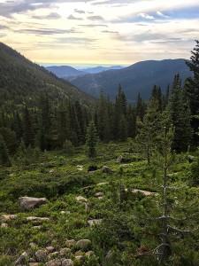 Good Morning Colorado