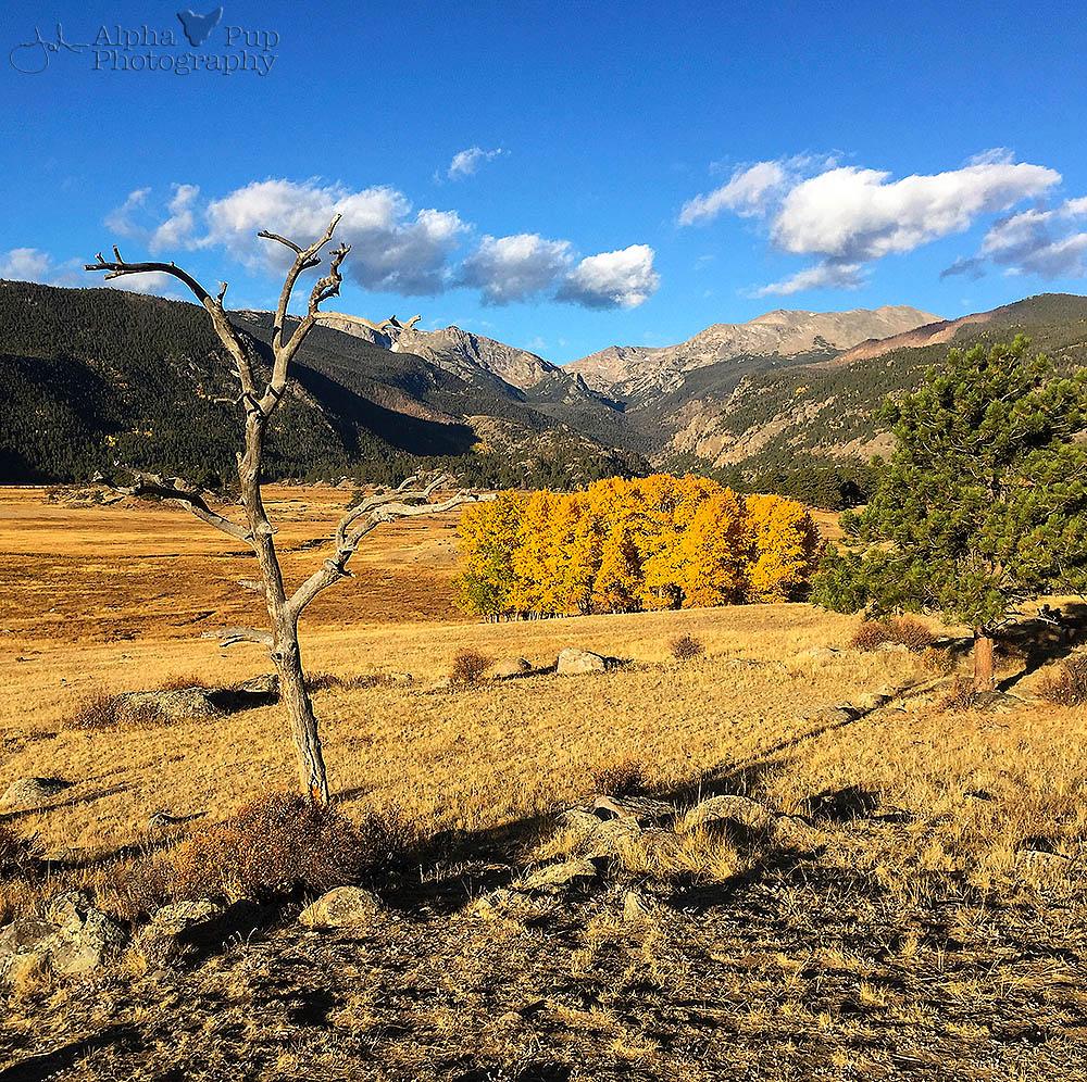 mountain meadow autumn above - photo #16