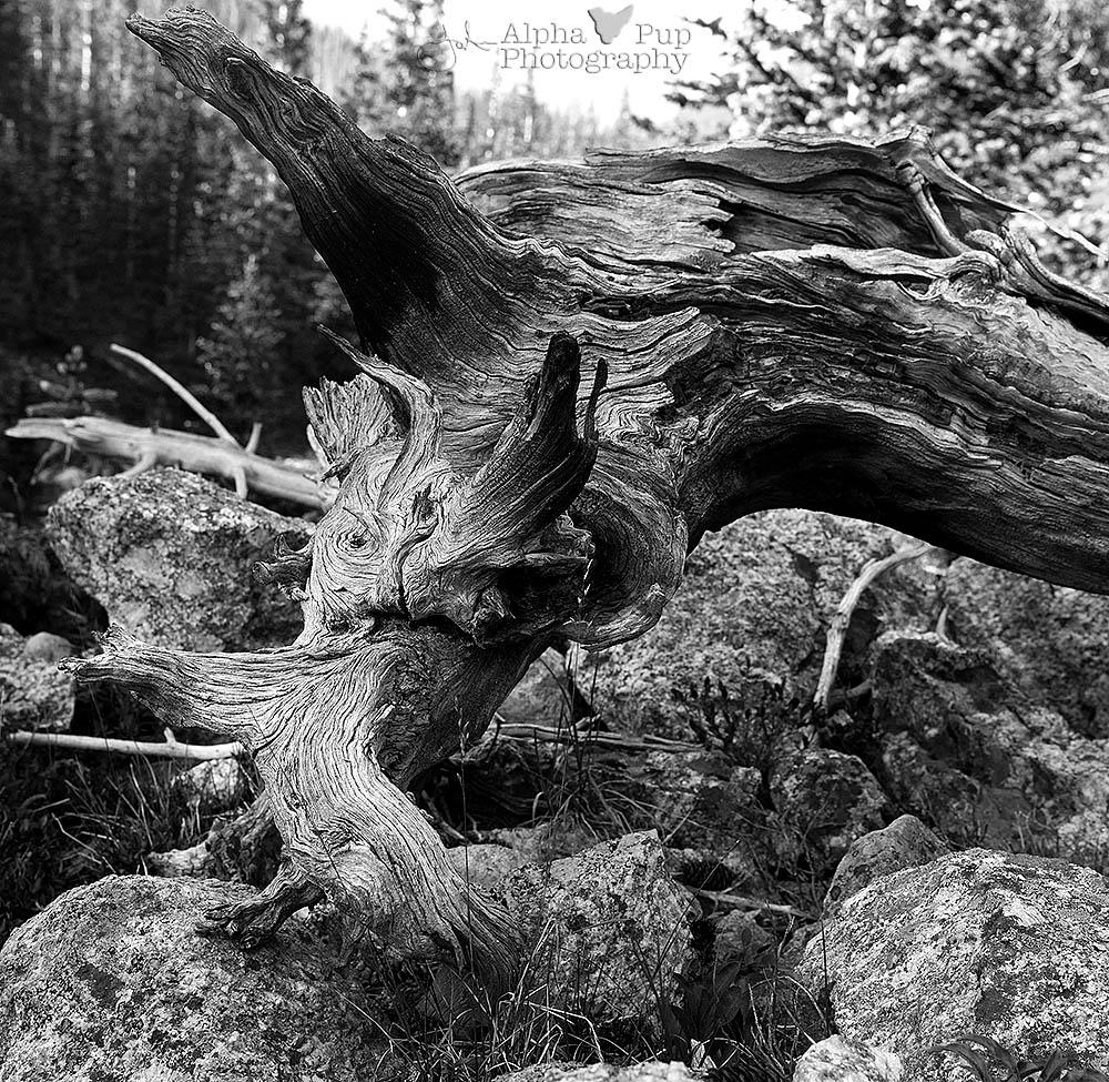 Creatures in Wood