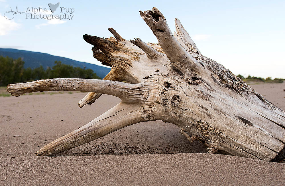 Downstream Driftwood