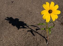 Solitary Sunshine