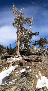 Loch Trees in Winter