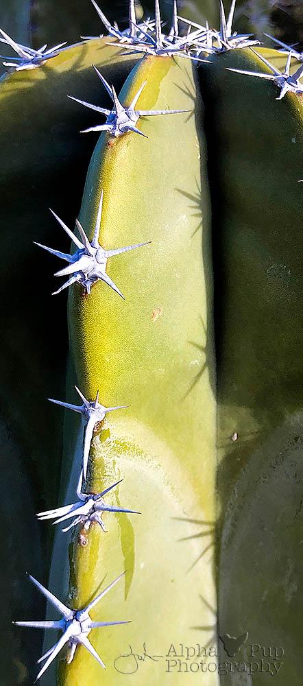 Sparkling Spines